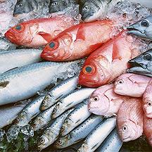 Yellowtail mercury for Mercury content in fish