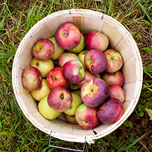 A Bushel of Apples